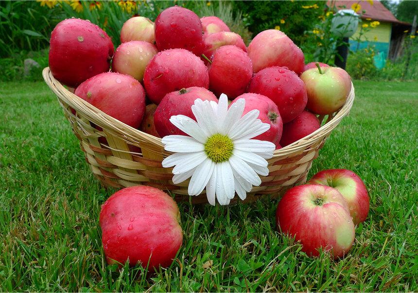 картинки поздравление с яблочным спасом