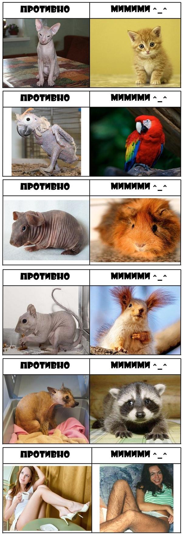 Противно vs Мимими