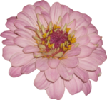 цветы_розовые (1).png