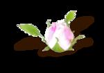 цветы_розовые (9).png