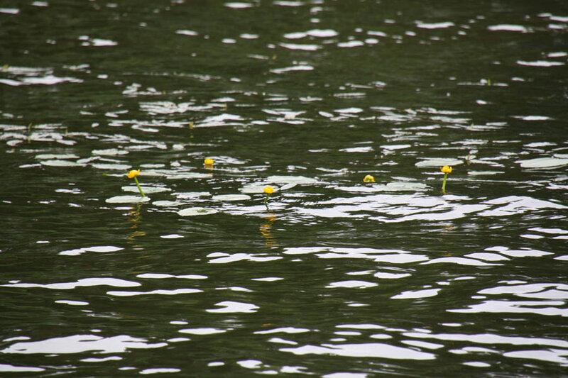 4. Вода и кувшинки