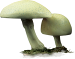 ldavi-paintersfaeries-mushroomseats1.png