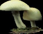 ldavi-paintersfaeries-mushroomseats1.png