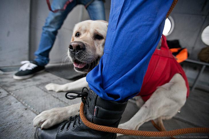 Собаки и учения МЧС (15 фото)