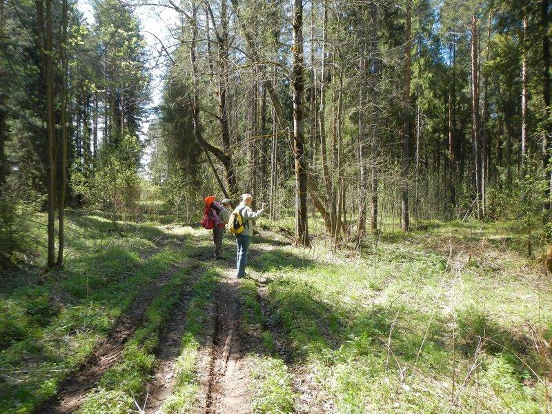 Заброшенная дорога в лесу под Чепецком