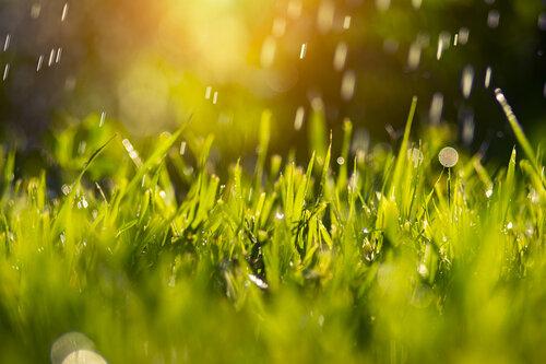 Грибной дождик :)