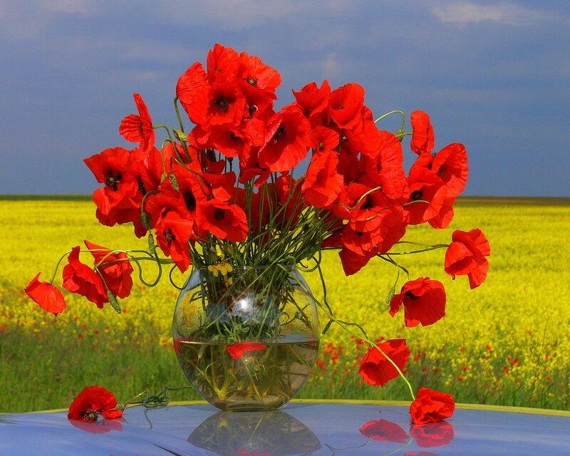 http://img-fotki.yandex.ru/get/9259/59709858.3b/0_fa574_26411df8_XL.jpg