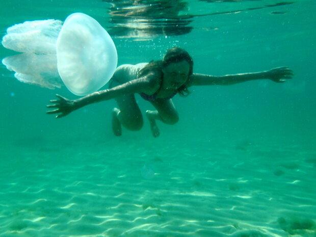 плавание с медузой рядом