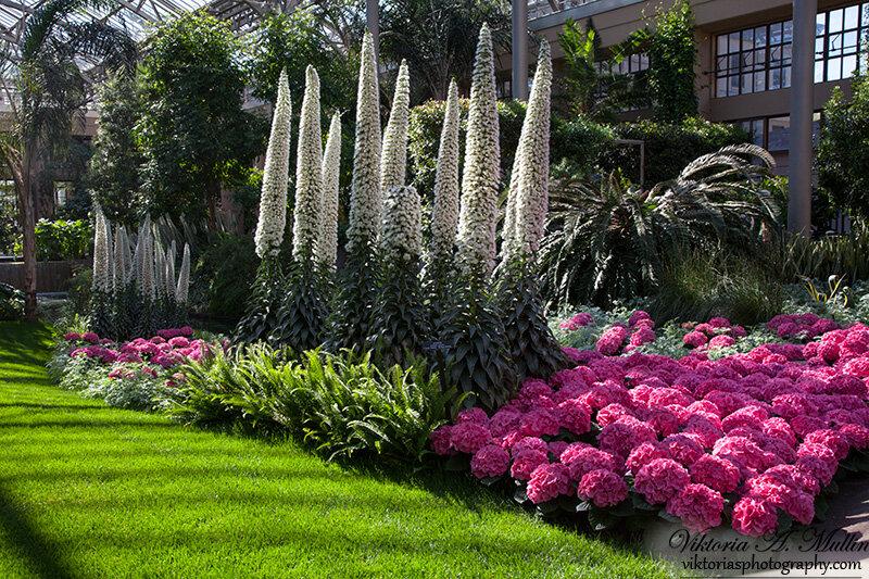 Сады Дюпона или Longwood Gardens-8395-Viktoria Mullin