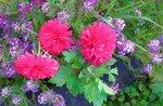 Цветы. Сентябрь 2015 (27).jpg