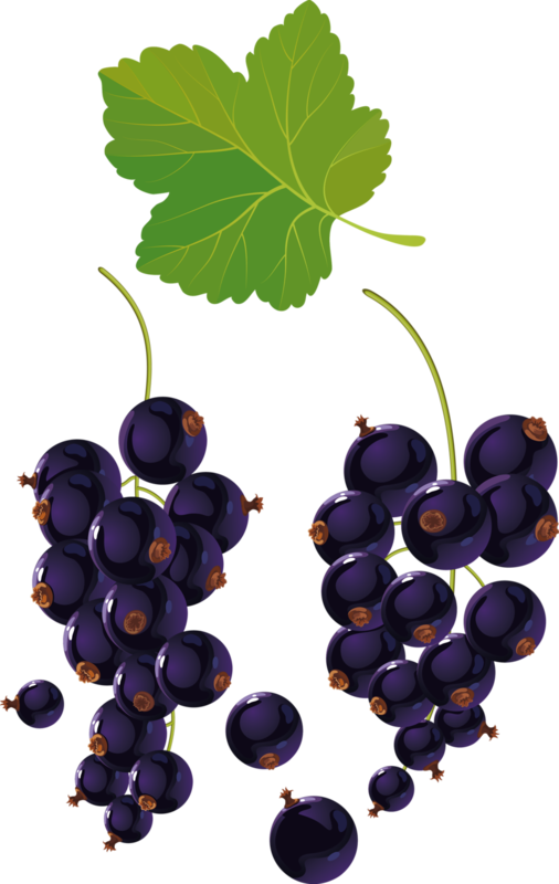 fruits (7).png
