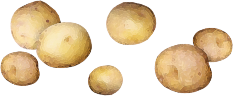 CatherineDesigns_LittleGarden_Potatoes.png