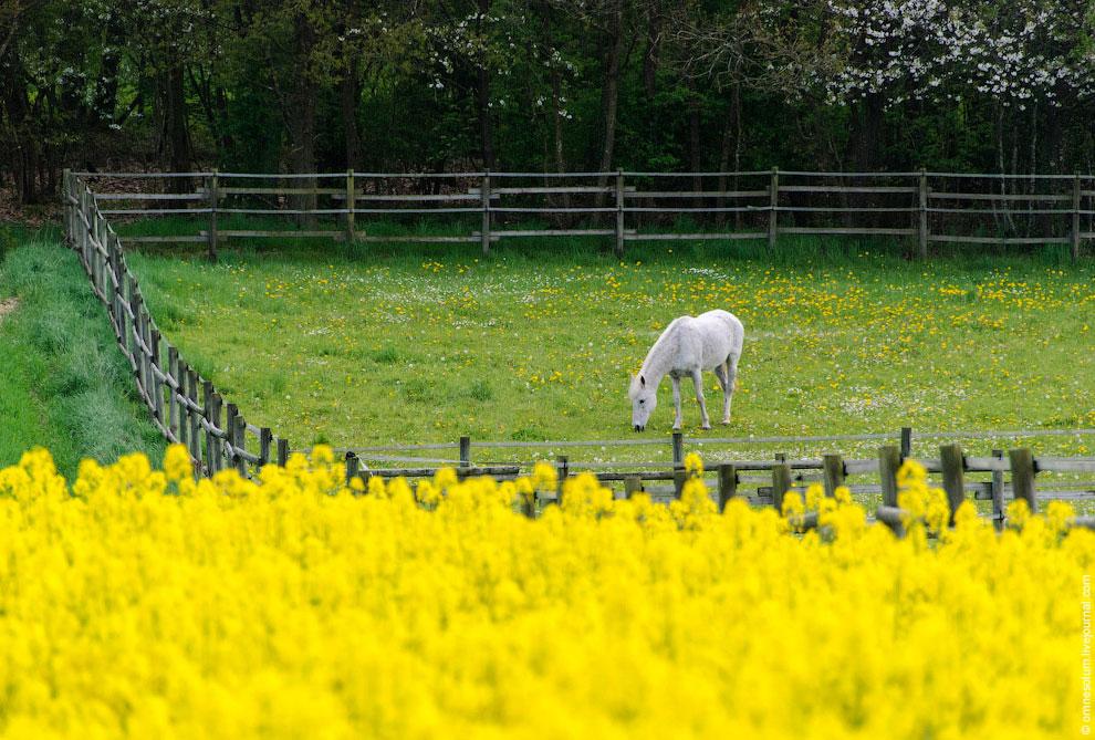 Честно говоря, охота за жёлтыми полями быстро превращается в бег наперегонки с облаками. Стоит тольк