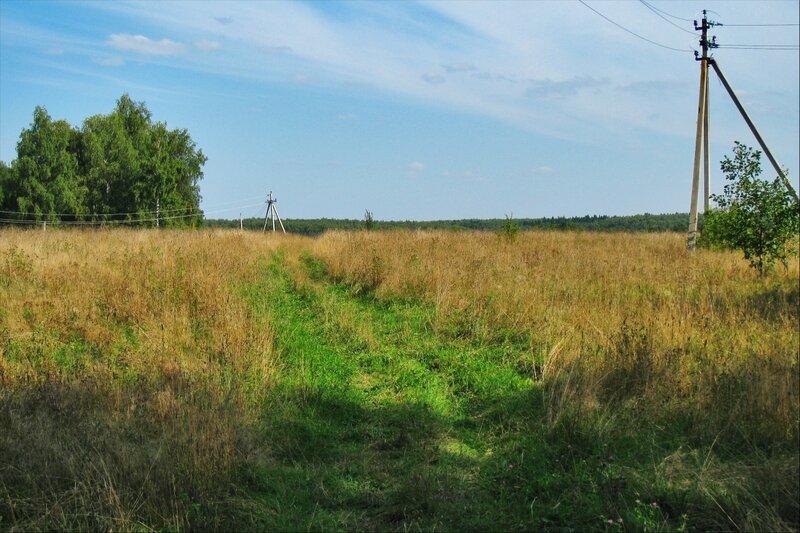 Поле у поселка Славино