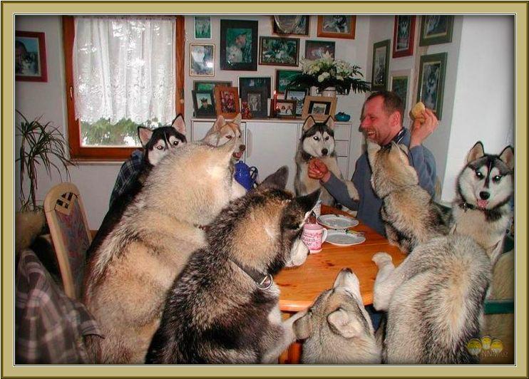 знакомства за круглым столом