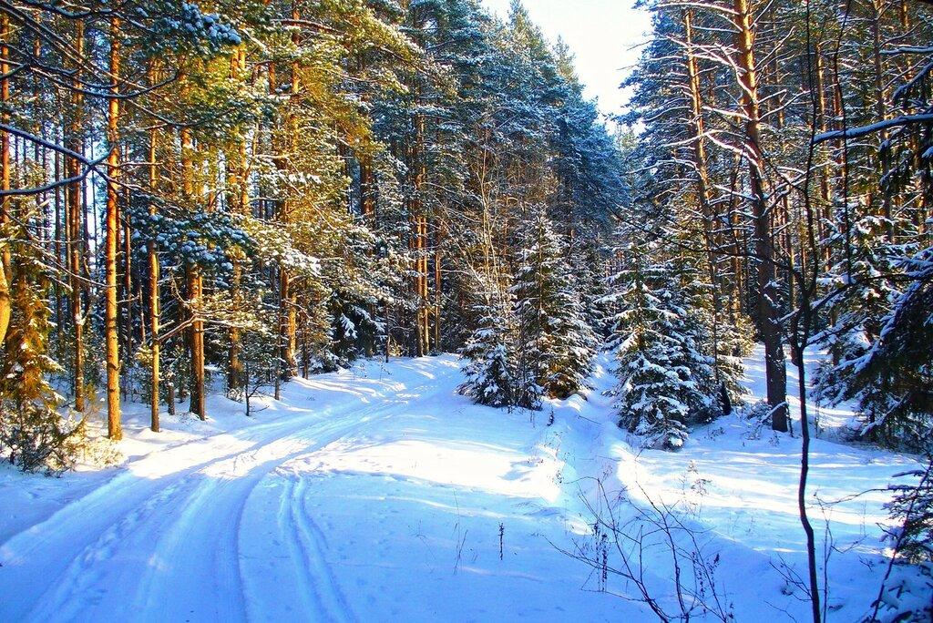 Лыжня в лесу.