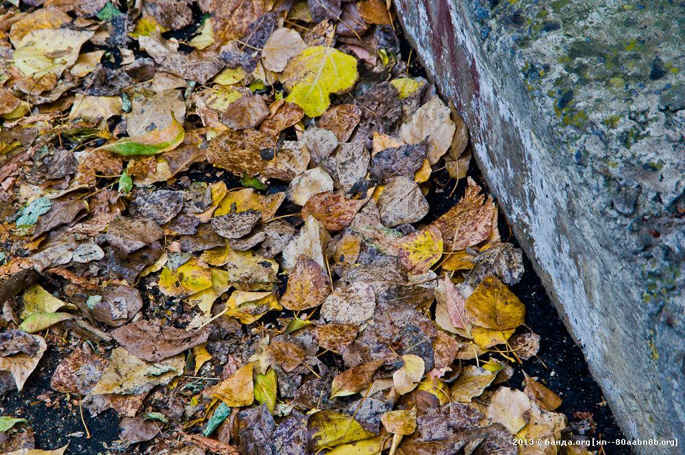 Гниющая листва осенью