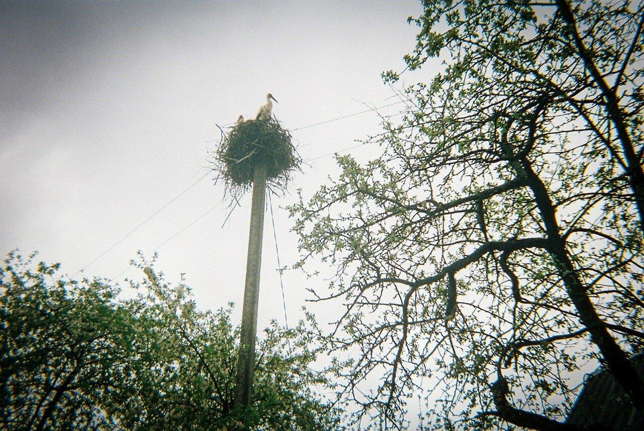 Аист свил гнездо на вершине телеграфного столба в заброшенной деревне в зоне отчуждения