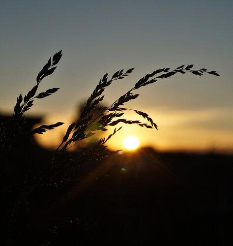 Летний вечер тих и ясен...