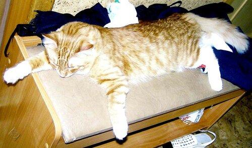 Устал котик