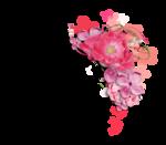 Palvinka_FlowerEssence_cluster (13).png