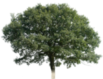 tree_16_png_by_gd08-d2ysap1.png