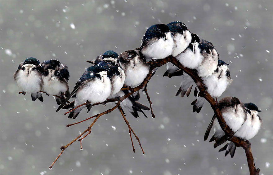 birds-keep-warm-bird-huddles-4__880.jpg