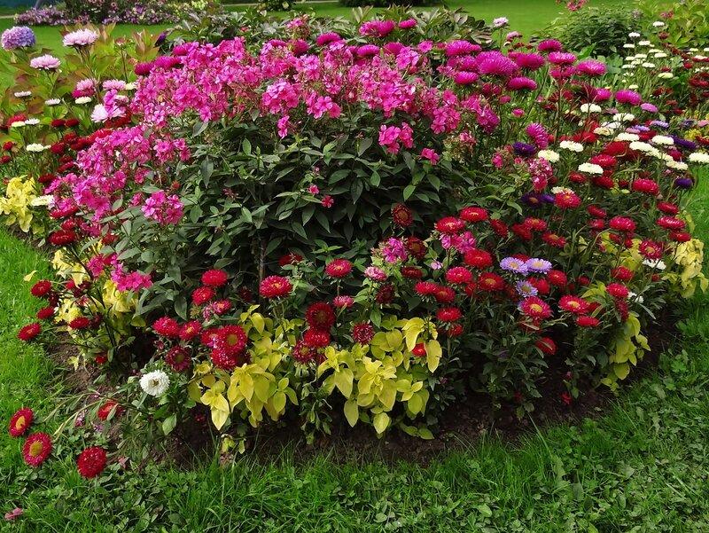 Цветы ранней осени