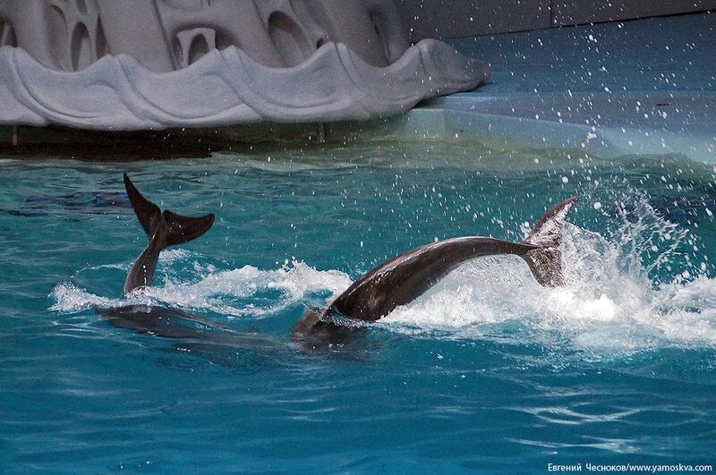 Лето. ВДНХ. Москвариум. Дельфин. 14.08.15.01..jpg