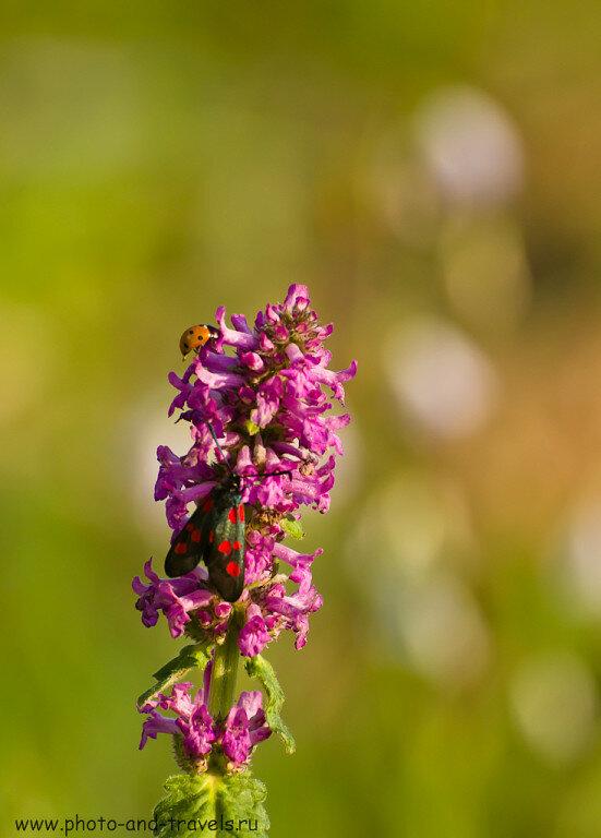 Пример фото цветов, снятого на телеобъектив Никон 70-300 совместно с зеркальной камерой Никон Д5100