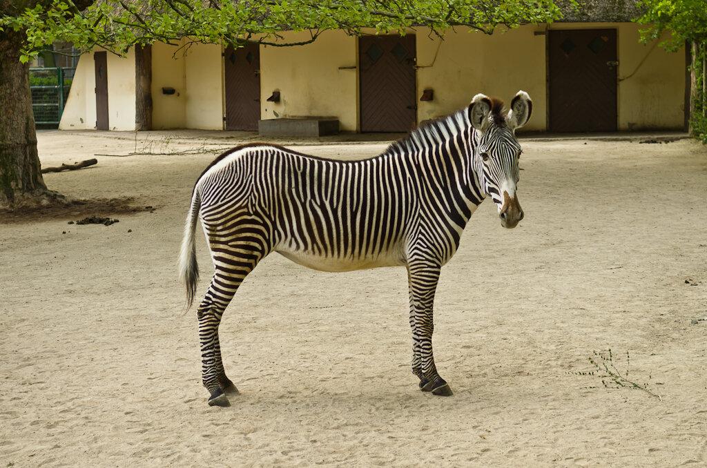 """Вот успел один """"трофей"""" заснять. Отзыв об экскурсии в зоопарк Франкфурта."""