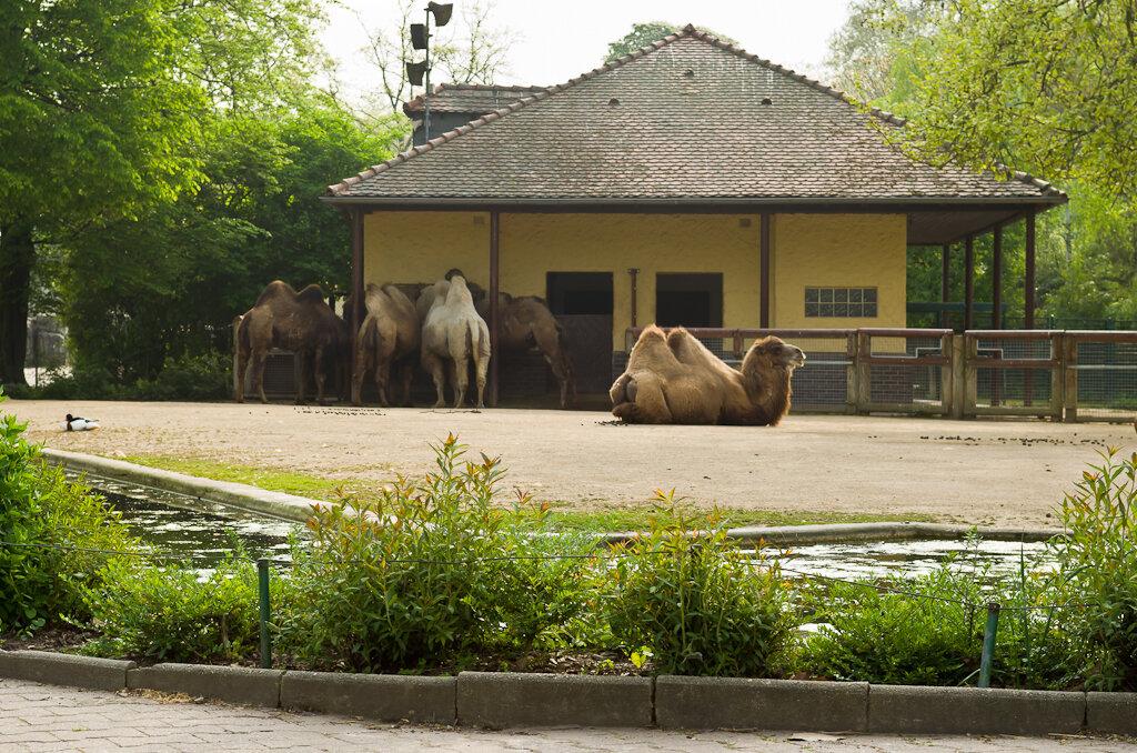 """Пристань """"кораблей пустыни"""". Отзыв о поездке во франкфуртский зоопарк."""