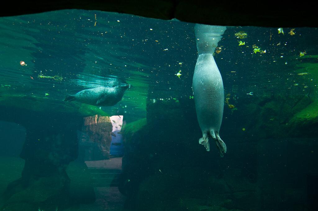 Подводное царство во франкфуртском зоопарке. Отзывы туристов об экскурсии.