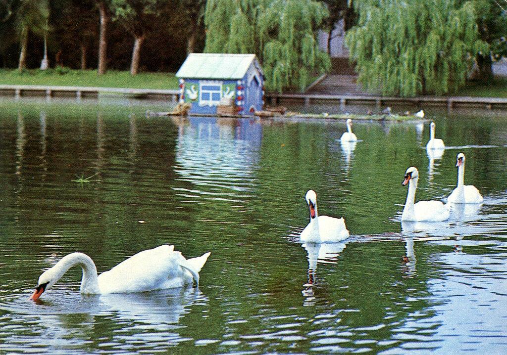 фото лебединое озеро астрахань