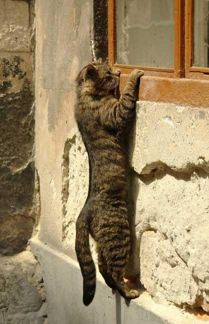 Котяхи учатся летать!..