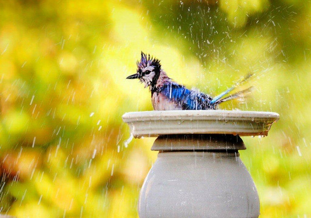 rain-bath.jpg