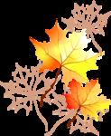 листья   клёна.png