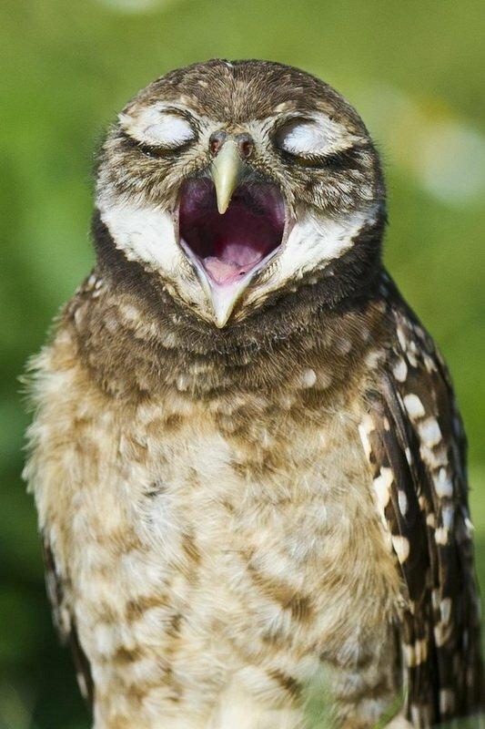 Милая мудрая сова