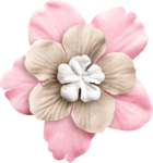 KMILL_flower-real1.png