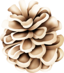 MRD_FrostyFriends_light brown pine cone.png