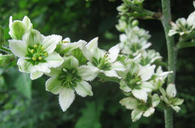 Растения, которые могут обеспечить человеку мучительную смерть 0_e9711_9be99330_orig