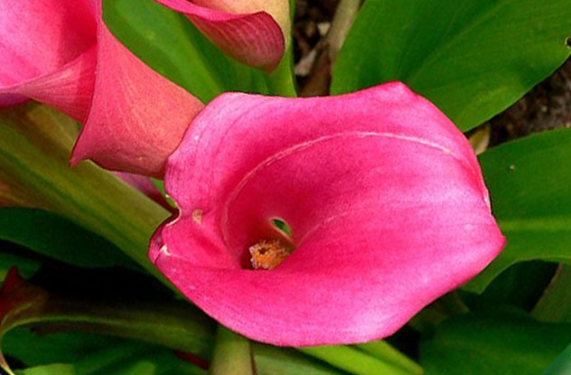 Растения, которые могут обеспечить человеку мучительную смерть 0_e9712_924d0f77_orig
