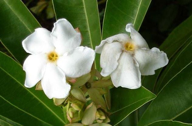 Растения, которые могут обеспечить человеку мучительную смерть 0_e9715_4c790981_orig