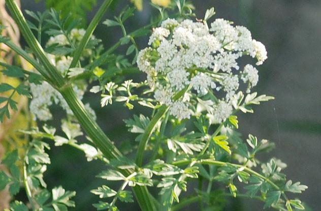 Растения, которые могут обеспечить человеку мучительную смерть 0_e9718_c3245580_orig