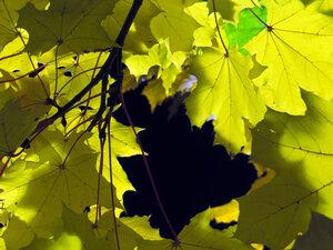 Осень. Фото Виталия Медведя