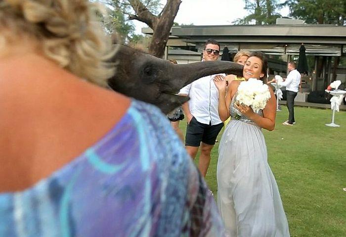 Неочакван сватбен обрат