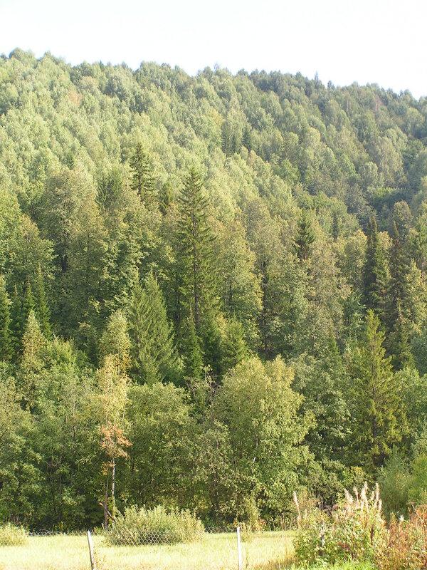 Горный лес (04.07.2013)