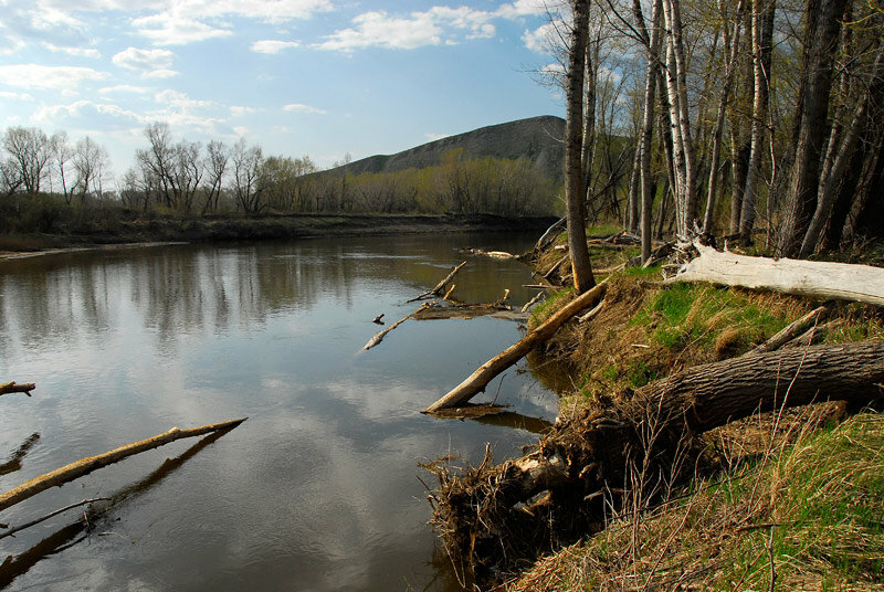 В реке много рыбы (24.10.2013)