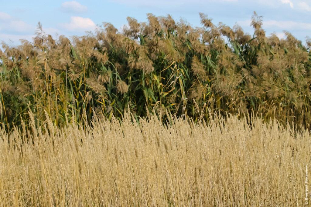 осень, лес, шебекинский район, белгородская область