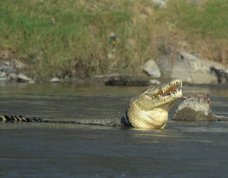 Рептилия третий год живет с удавкой на шее